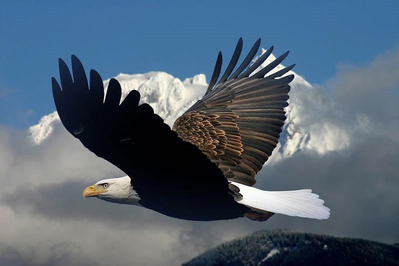 Eagletotem Symbolism Galaxy Dreams