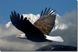 eagle4_0