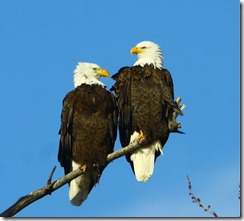 Eagles-Photos-2012 01