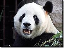 panda-724851