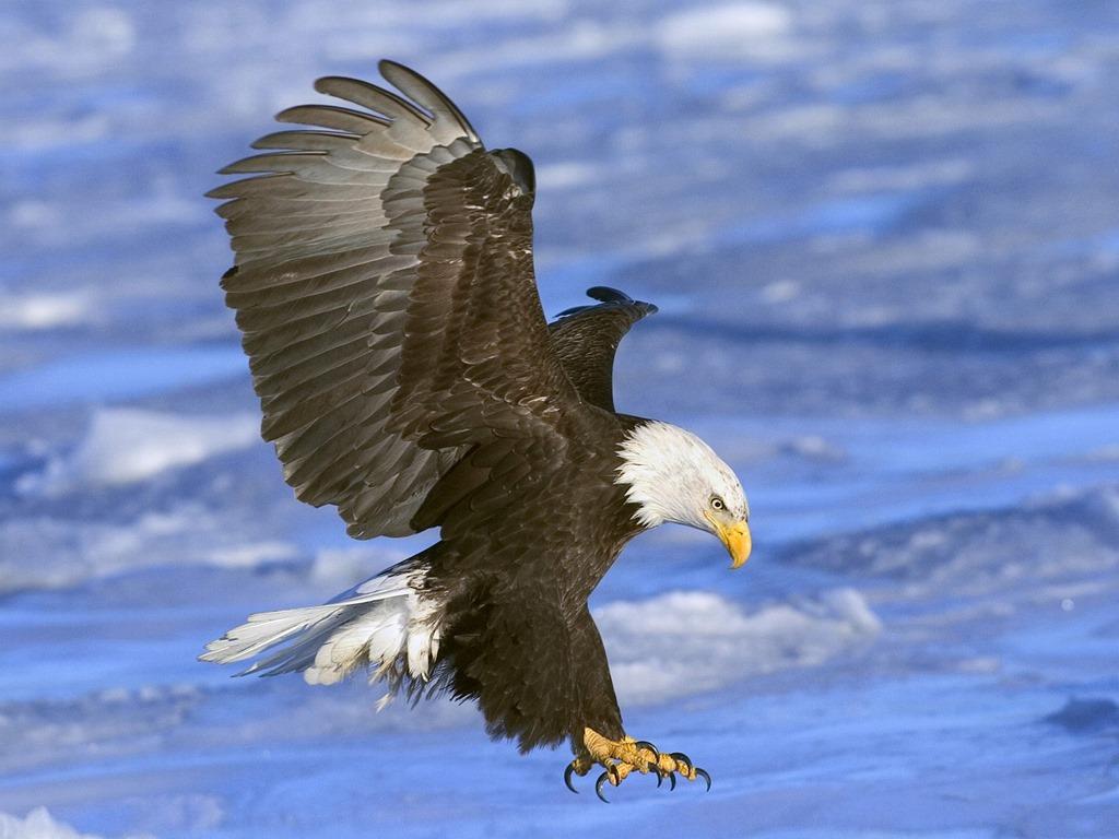 Eagletotem symbolism galaxy dreams the bald eagle biocorpaavc Choice Image
