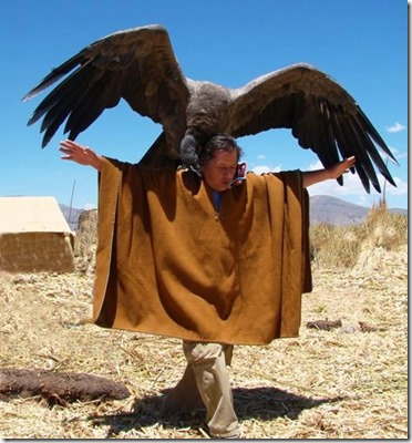 the vulture-condor
