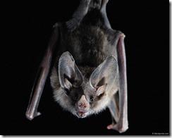 bats21