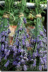 Bunches-of-drying-lavender-via-www.gardentherapy.ca_.